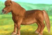 Prends soin d'un petit cheval