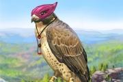 Nourris et vole avec un faucon